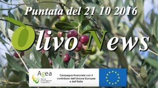 Olivo News 21 10 2016