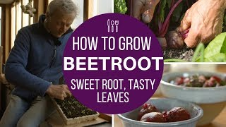 Beetroot: succeed with early sowings \u0026 harvest,  same method for autumn/winter roots