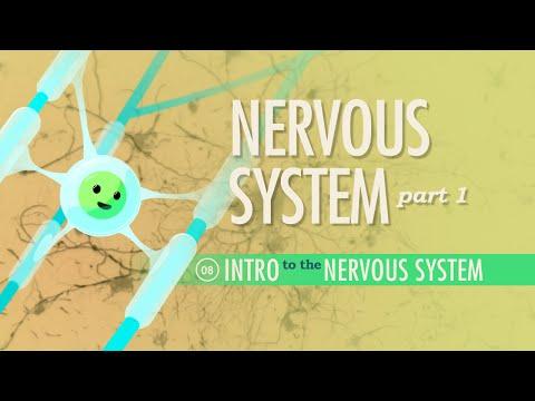 The Nervous System, Part 1: Crash Course A&P #8