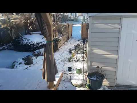 Koi Pond Frozen 2017