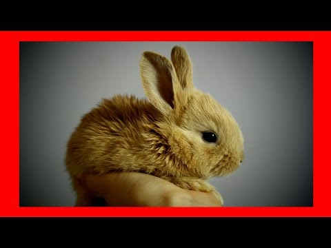 Relaxing music for rabbits & bunnies (5 Hours) █ soothing calming rabbit music for pets & animals