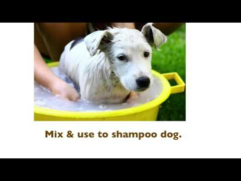 How to Remove Skunk Spray from a Dog
