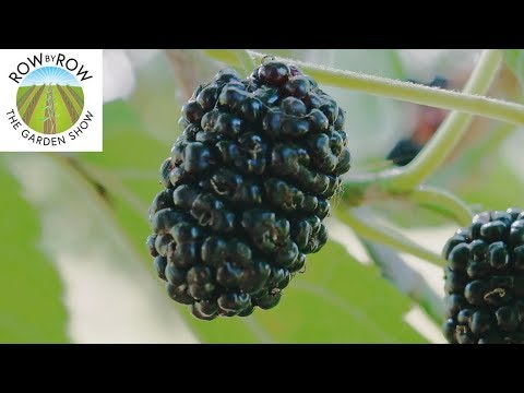 You Should Be Growing These Fruits on Your Homestead!