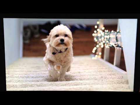 Flying puppy
