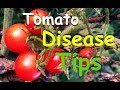 Tomato Disease Tips & Why You Shouldn't Worry