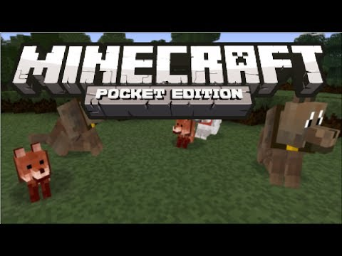 Minecraft Pocket Edition - How to Find Wolves Tutorial