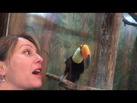 Toucan desperate for kiss