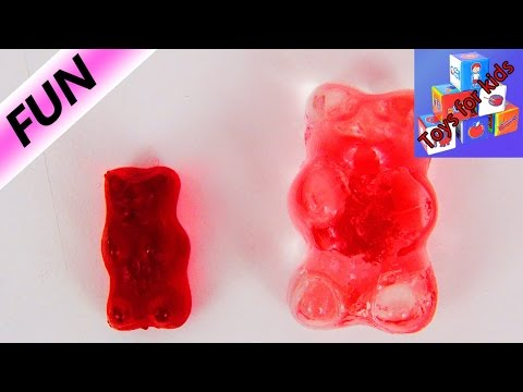 Gummy Bears in Water - What happens if you leave a gummy bear in water? - Long-term experiment