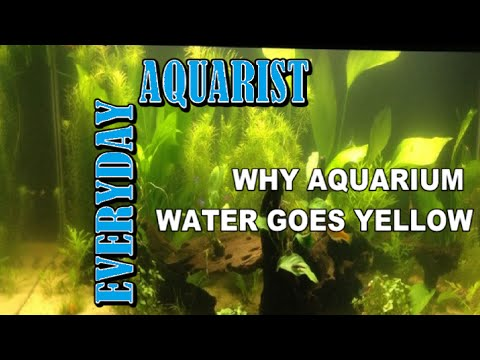 How To Stop Yellow Aquarium Water