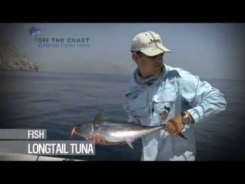 Longtail Tuna: Spinning in Oman