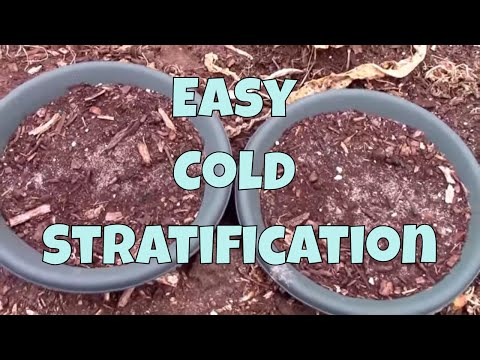 Perennial Seed Cold Stratification and Germination - The Easy Way