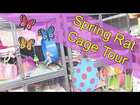 Rat Cage Tour 2018 | Spring Themed