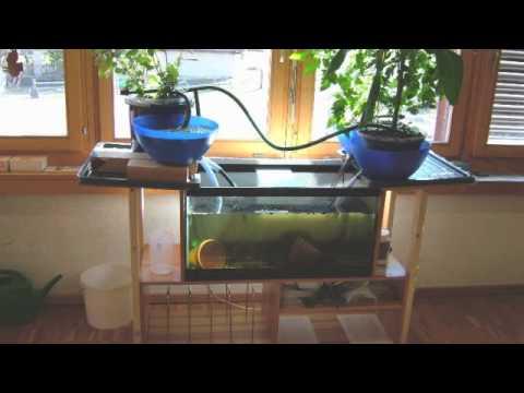 DIY Aquaponics   DIY Aquaponics Systems