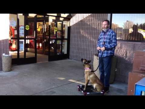 Dog Aggression Toward People