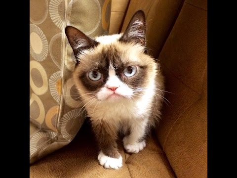 My Year Of Grumpy Cat
