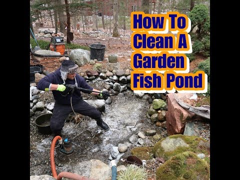 Fish Pond Clean Out TIPS Vlog 015