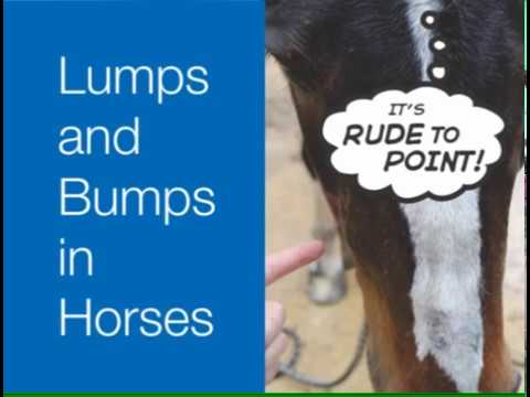 Lumps and Bumps in Horses