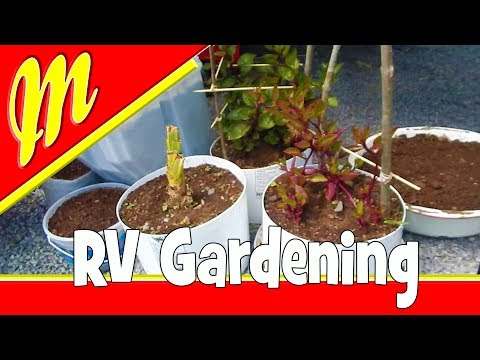 Plant an RV Bucket Garden our own Form of Mobile Permaculture. Nomadic Sustainability