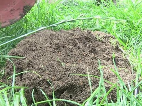 How To Eliminate Ants From Your Garden