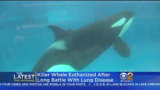 Sea World Killer Whale Matriarch Euthanized