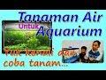 Tanaman Air Penghias Aquarium : Indah, Murah, dan Mudah