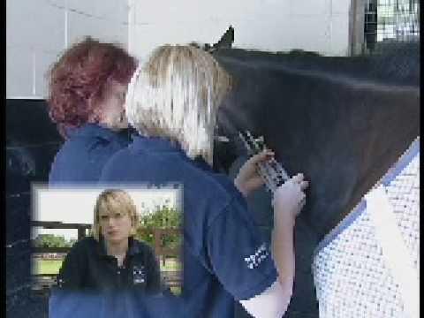 Afuturein veterinary nursing - Part one