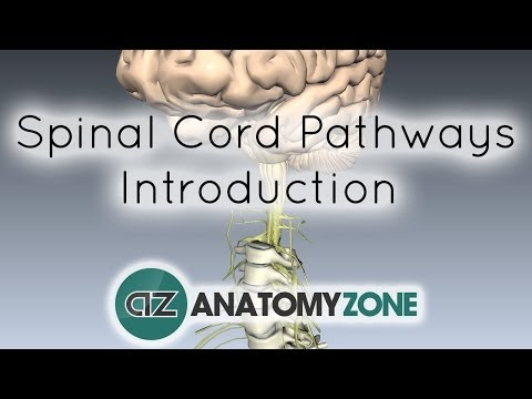 Spinal Pathways/Tracts - Part 1 - Introduction - Anatomy Tutorial
