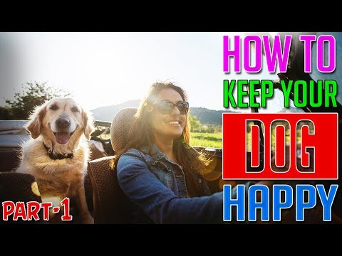 How To Keep Your Dog Happy    Part-1    Dog Facts