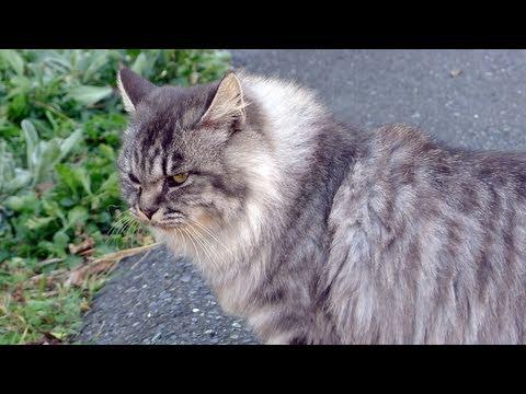 Cat Island, Japan, Part 1 [TofuguTV]