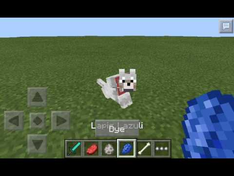 Minecraft PE-How to tame,dye,and breed wolf-0.11.1