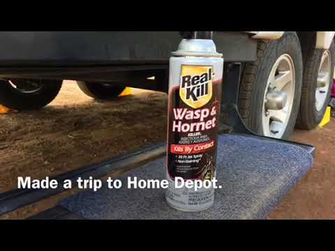Removing Wasps From My Camper