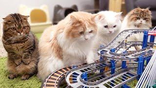 기차놀이에 고양이들이 난리가 났어요