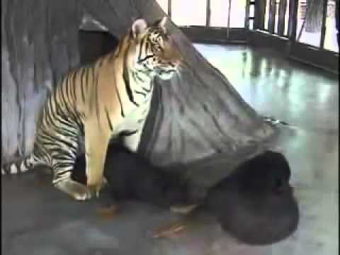 Xxx Mp4 Tiger And Dog Mating 3gp Sex