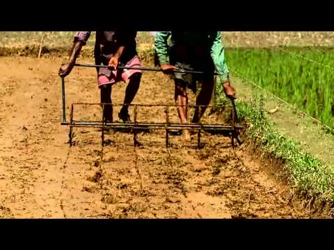 Single Seedling