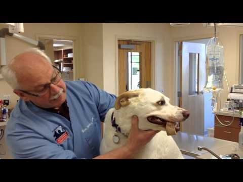 Pet Tips - Bone Removal