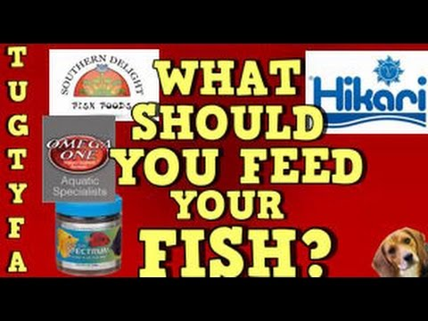 What To Feed Your Fish, The Ultimate Guide To Your First Aquarium Episode 8