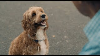 Because you can never have too many dog videos | #CreateNewTraditions