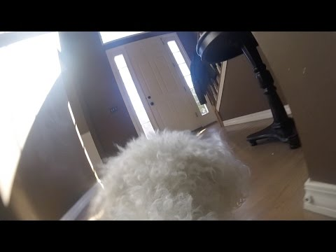 GoPro on my Dog Left Home Alone (HEARTBREAKING)