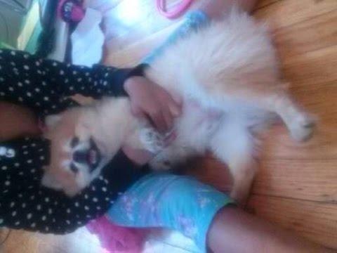 My dog UTI !!!