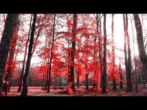 Free ★ Stock Footage Falling Leaves Motion Background HD 1080P (Red Colorize Version)