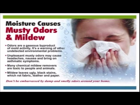 The Problems with Excessive Indoor Moisture