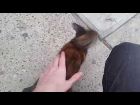 Stray ABANDONED NYC kitten NEEDS HOME - NO survival skills sits in POURING RAIN in NY - Pt. 3