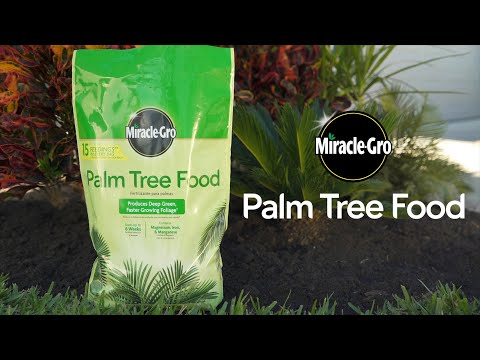 How to Use Miracle-Gro® Palm Tree Food