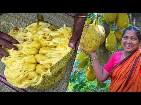 Jackfruit Collecting From Tree and Eating by Kids   Village Food Life