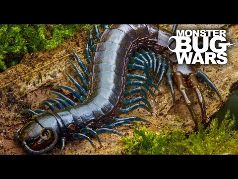 Best Centipede Showdowns | MONSTER BUG WARS