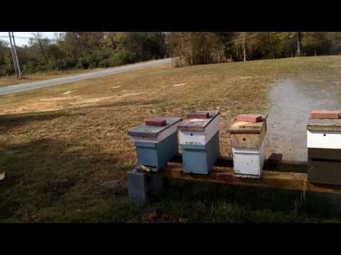 Treating For Mites With Fogger Mineral Oil