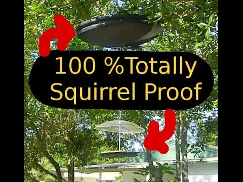 Keeping Squirrels Out of Bird Feeders