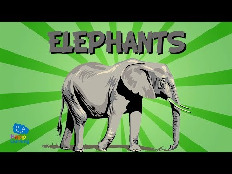 The Elephant | Educational Video for Kids.