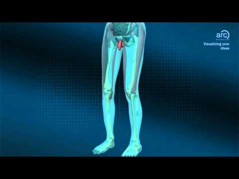 Medical Animation - Human Body