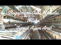 Bagaimana cara memulai usaha ternak ayam arab